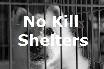 NO-Kill-shelters-1.jpg